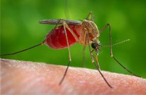 Mosquitoes and health damages